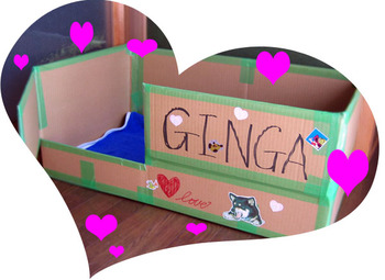 Ginga_