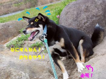 Photo_151