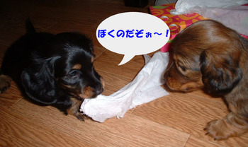 Photo_198