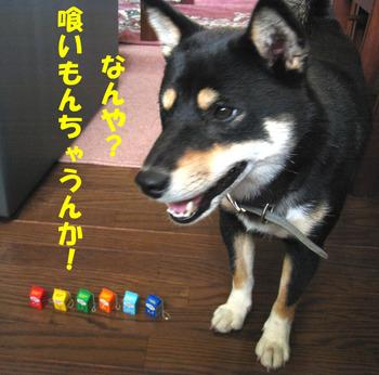 Photo_207