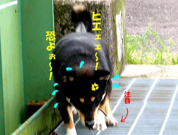Photo_223
