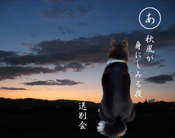Photo_287