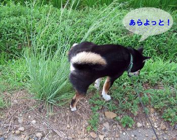 Photo_339