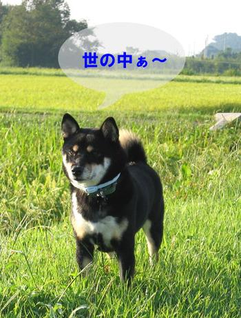Photo_354