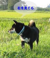 Photo_356