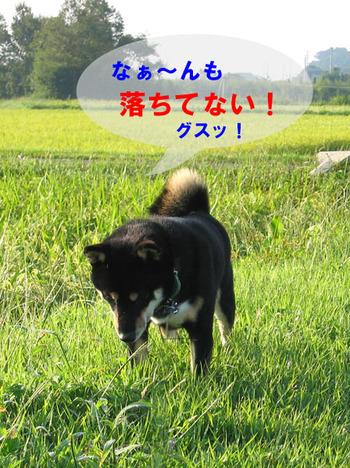 Photo_358