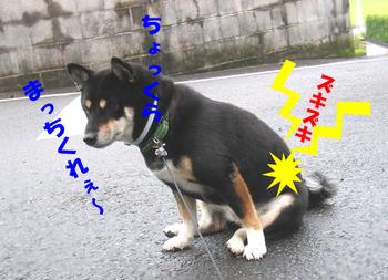 Photo_374