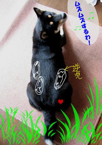 Photo_379