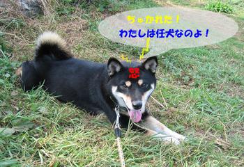 Photo_401