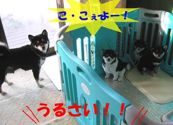 Photo_490