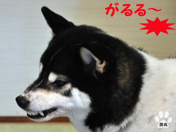 Shion1