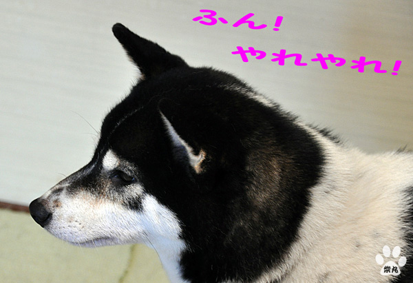 Shion3